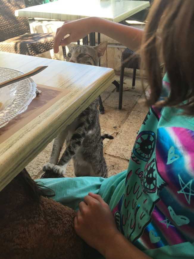 This adorable cat tried to join us for lunch in a cute Italian restaurant in Zichron.